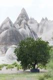 Green trees in the dry mountain in Cappadocia Turkey. Green trees in the dry mountain Stock Photo