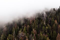 Green Trees With Fog Royalty Free Stock Image