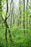 Green trees forest Stock Images