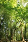 Green Trees in Forest Stock Images