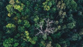 Green trees in the forest as seen from top royalty free stock photography