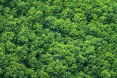 Green trees forest background Royalty Free Stock Photos