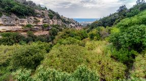 Green trees in forest at Crete, Greece. Green trees in Mili gorge at Crete island, Greece stock photography