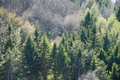 Green trees Royalty Free Stock Photo