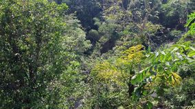 Green trees in forest. Green trees at forest in Penang hill, Malaysia stock footage