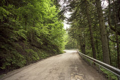 Green Trees, Forest road. Turkey's big forest at Bolu province in Turkey Stock Image