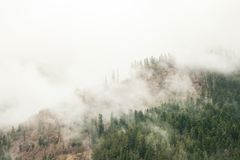 Green trees in a forest on the slopes of mountains in fog. Or low clouds background Royalty Free Stock Photos