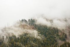 Green trees in a forest on the slopes of mountains in fog. Or low clouds background Stock Image