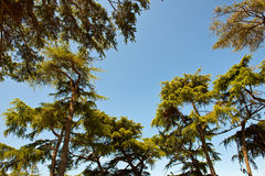 Green trees forming a border around blue sky Stock Photography