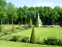 Green trees and fountain   in the park of petergof Stock Photography