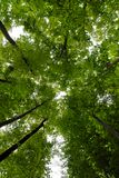 Green trees frame Royalty Free Stock Image