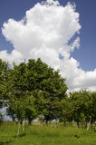 Green trees Stock Images