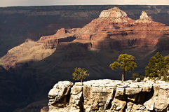 Green Trees in Grand Canyon - dramatic light Stock Photography