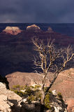 Green Trees in Grand Canyon - dramatic light Royalty Free Stock Photography