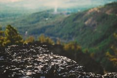 Green Trees and Green Grass on Mountain Royalty Free Stock Images