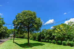 Green trees with green grass, poles with wires, highway and blue sky with white fluffy clouds. At hot sunny summer day Stock Images
