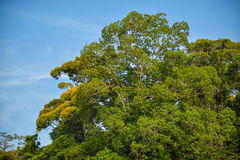 Green Trees. Group of green trees in a sunny day Royalty Free Stock Photo