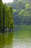 Green trees grow in the lake. Landscape by the lake with green trees Stock Photography