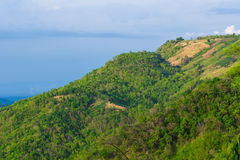 Green trees on hill of thailand Royalty Free Stock Photos