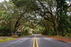 Green trees at Hilton Head Stock Image