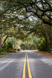 Green trees at Hilton Head Stock Photo