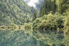 Green trees and inverted image in water Royalty Free Stock Images