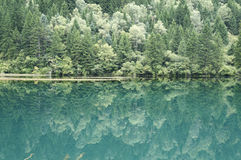 Green trees and inverted image in water.  Royalty Free Stock Image