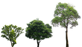 Green trees isolated on white Stock Images