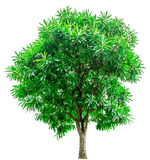 Green trees isolated on white background. Royalty Free Stock Photography
