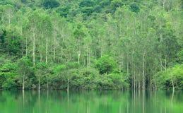 Green trees lake Stock Photography