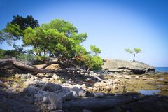 Green trees in a landscape with a sea view. Lonely tree in a seascape on a blue sky royalty free stock photography