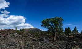 Lava flow at Sunset Crater Arizona. Green trees on Lava flow at Sunset Crater National Monument near Flagstaff Arizona Stock Images