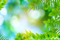 Green trees and leaf greenery bokeh. Blurred focus royalty free stock photo