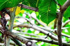 Green trees and leaf greenery Royalty Free Stock Image