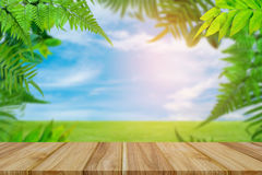 Green trees and leaf greenery sky cloud background. Top table wood Green trees and leaf greenery sky cloud background at daylight stock images