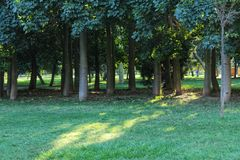 Green trees in leafy forest.  Stock Photos
