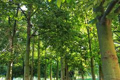 Green trees in leafy forest. Green trees in leafy forest Royalty Free Stock Photos