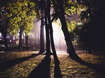 Green Trees Lighted during Night Time Stock Photos