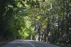 Green trees of a long journey road. Green trees of nature sheltering the long journey road Stock Image