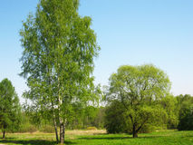 Green trees on a meadow Stock Image