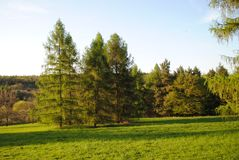 Green trees, meadow and blue sky Royalty Free Stock Photo