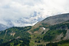 Green trees and meadows and snowy mountains in Mount Rainier. Green trees and meadows in front of snowy mountains in Mount Rainier National Park, Washington Stock Photography