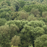 Green trees. Green mixed forest trees in the middle lane Royalty Free Stock Photos