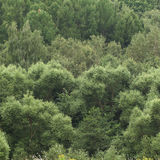 Green trees. Of mixed forest  in the middle lane Royalty Free Stock Image