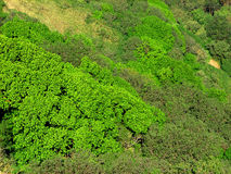 Green trees on mountain Stock Photography