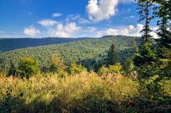 Beautiful summer landscape. royalty free stock photo