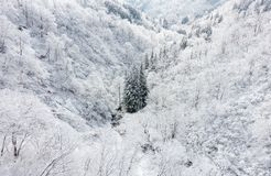 Green Trees Between Mountain With Snow Surface Royalty Free Stock Images