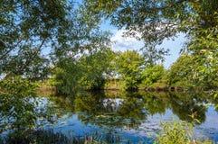 Green trees near the river. Stock Photos