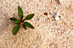 Green trees new birth on the land that the sand. Royalty Free Stock Photography