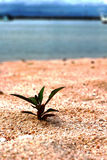 Green trees new birth on the land that the sand. Royalty Free Stock Image